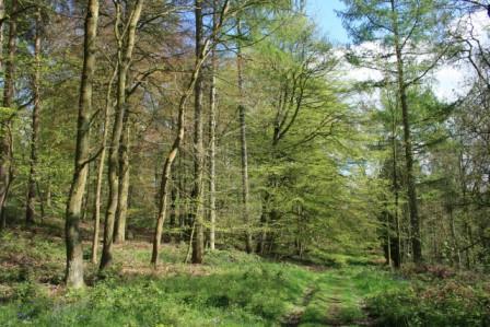 Wrekin Woodland